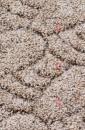 Ковролин Бук 17 кремово-коричневый